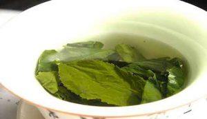 Tè verde: EFSA valuta gli eventuali problemi per la salute