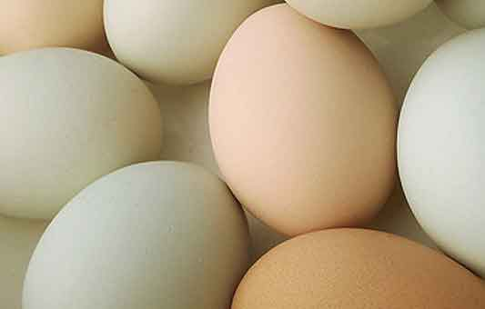 New study: dietary cholesterol or egg consumption do not increase the risk of stroke
