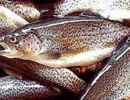 Pesticidi nel pesce