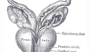 Prostata: test del sangue identifica in molti casi se c'è tumore maligno