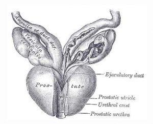 test del carcinoma prostatico molecolare