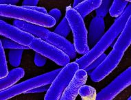 Cancro del colon-retto, flora batterica intestinale e microRNA