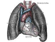 Dai polmoni una proteina predice prognosi ed aggravarsi dello scompenso cardiaco (14/06/2019)