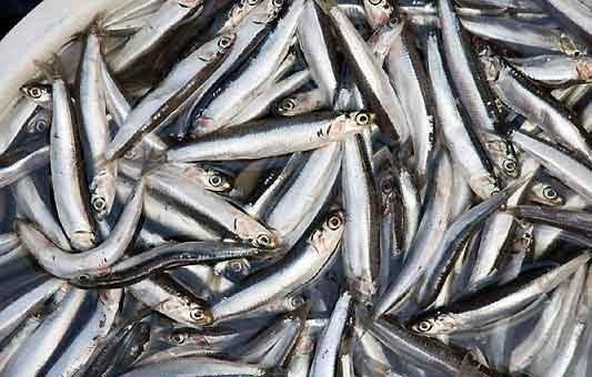 Come riconoscere se il pesce è fresco (27/12/2019)