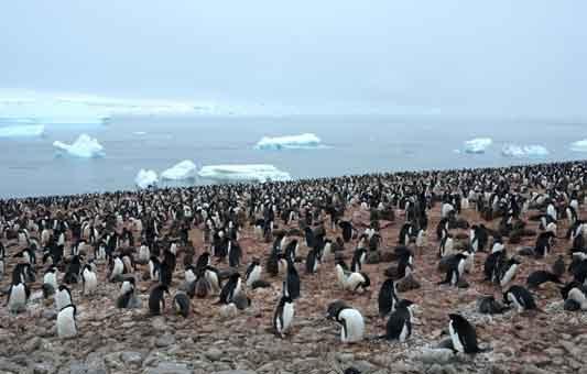 I pinguini rilasciano nell'aria gas esilarante  (21/07/2020)